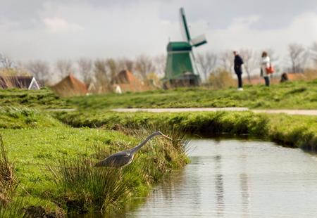 holland landscape: Landscape in Holland