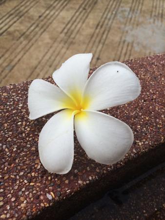 angiosperms: Fall Flower