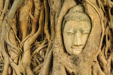 the ancient buddhas statue was place under a big three photo