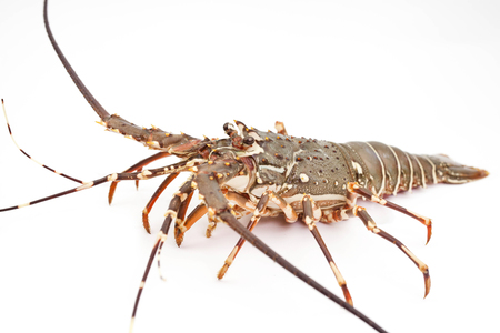 lobster isolate on white background Stock Photo