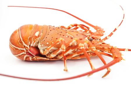 lobster isolate on white background Archivio Fotografico