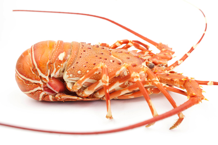 lobster isolate on white background 免版税图像