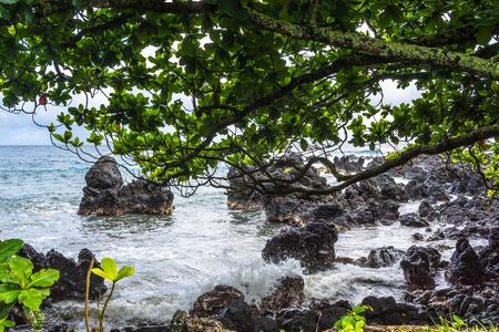 maui: Ocean, rocks and vegetation in Maui, Hawaii Stock Photo