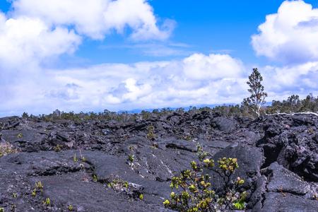 big island: Vegetation on the lava fields in Big Island, Hawaii