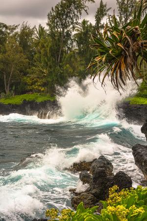 palmier: Waves crashing on the rocks, Maui, Hawaii