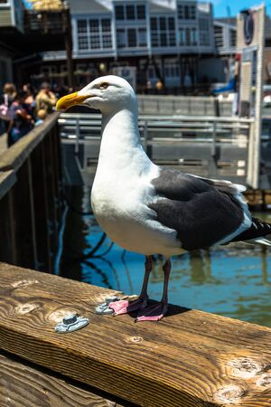 bannister: The seagull on the banister, San Francisco