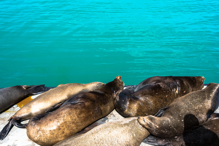 santa cruz: Sea lions in Santa Cruz, California Stock Photo
