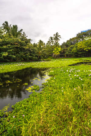 aquatic herb: The pond of Spring Water in Big Island, Hawaii Stock Photo