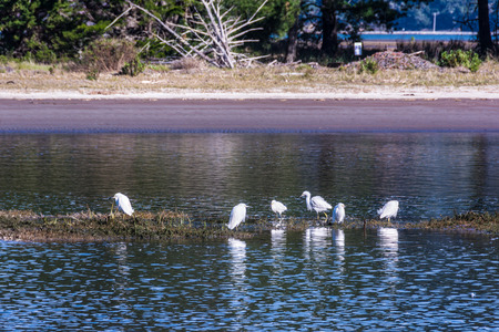 long legged: Herons on the pond in Bolinas, California