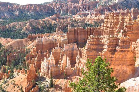 hoodoos: Hoodoos in Bryce Canyon, Utah