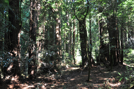 muir: Muir Woods National Monument, California