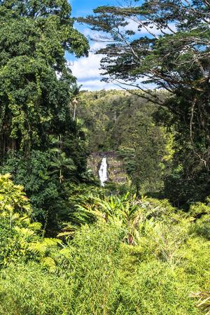 big island: Akaka Falls, Big Island, Hawaii Stock Photo