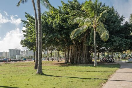 aerial roots: Banyan tree in Waikiki, Oahu, Hawaii Stock Photo