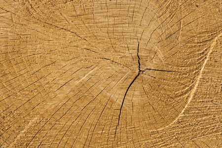 photo of cut wood at the site of incision Stock Photo - 12952570