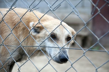 sad dog behind a wire fence in the kennel photo