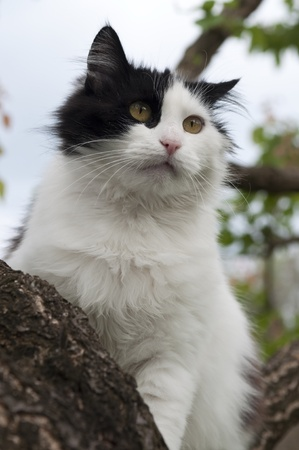 portrait of black and white cat in a tree photo