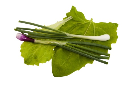 mix lettuce, sorrel and onions on white background photo