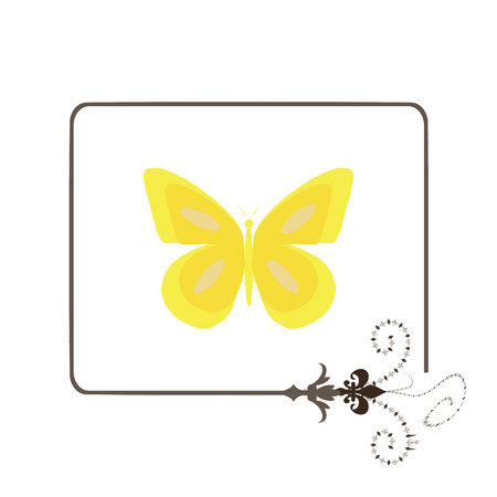 yellow butterfly isolated on a white background photo