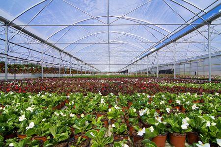 glasshouse: Glasshouse with plants