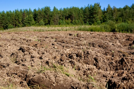 arable land: arable land on forest and sky background