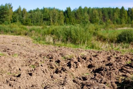 tierra fertil: tierra arable sobre fondo forestal y el cielo