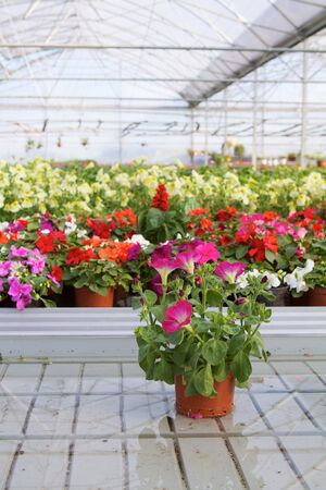 Glasshouse with flowers photo