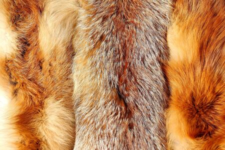 Red fox fur with pied beautiful hairs Stock Photo