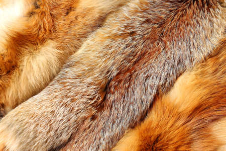 peltry: Red fox fur with pied beautiful hairs Stock Photo