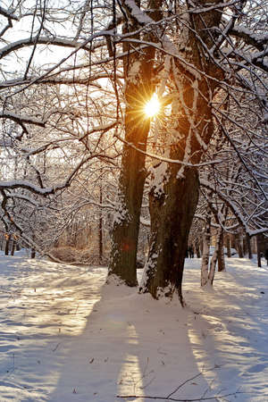 Beautiful warm sunset in the cold forest photo