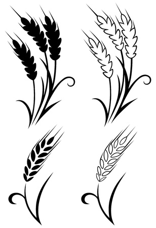 crop  stalks: Wheat and rye