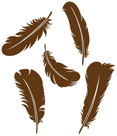 Feather Set Stock Vector - 15785569
