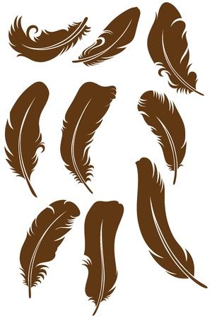 plume: Set plume Illustration