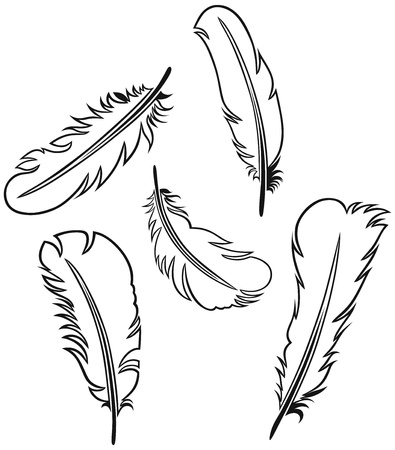 Feather Set Stock Vector - 15785595