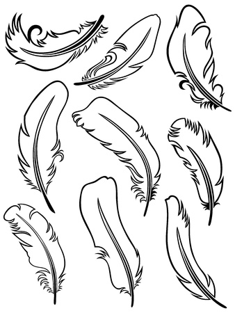 Feather Set Stock Vector - 15785584