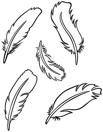 Feather Set Stock Vector - 15785593
