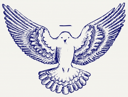 drawing dove: dove symbol
