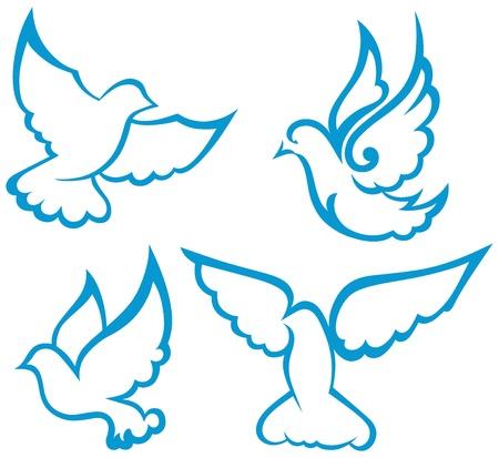 peace dove: dove symbol