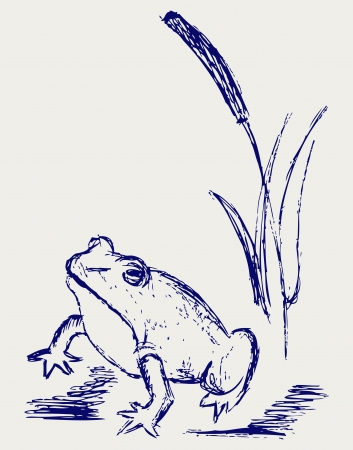 simple line drawing: Frog sketch.