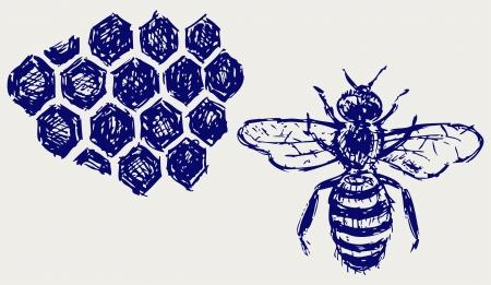 honeyed: Working bee on honeycells