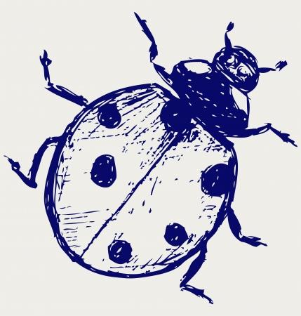 Ladybug  sketch Stock Vector - 15831696