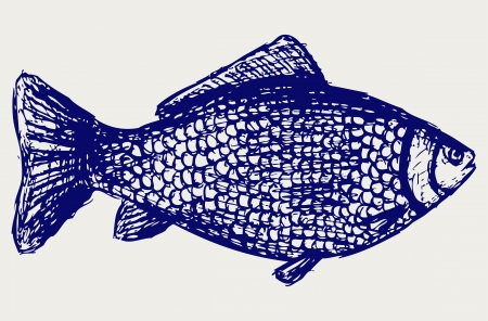 outline drawing of fish: Crucian carp. Sketch