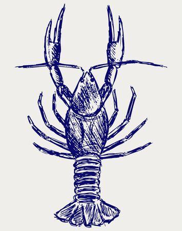 crayfish: Crayfish sketch