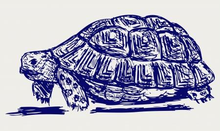 Ear tortoise. Sketch Stock Vector - 15843249