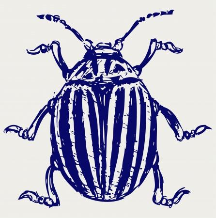 Beetle leptinotarsa decemlineata. Sketch Stock Vector - 15843227