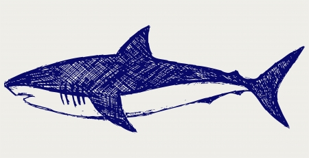 outline drawing of fish: Reef Shark. Sketch