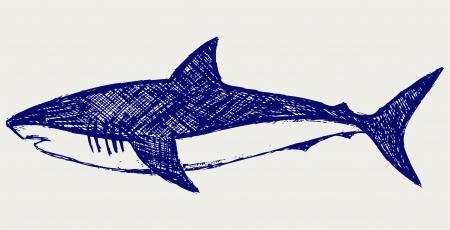 rough sea: Reef Shark. Sketch