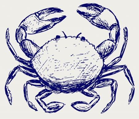 seafood dinner: Crab sketch Illustration