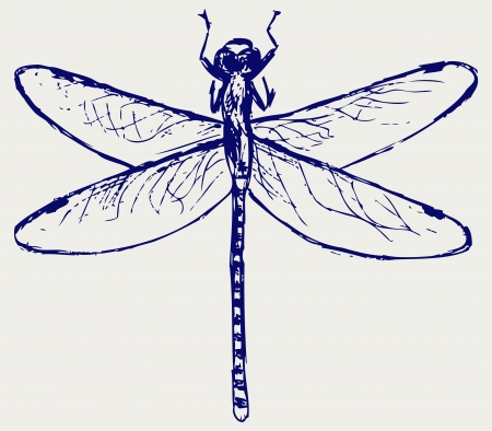 Dragonfly. Sketchy Vector