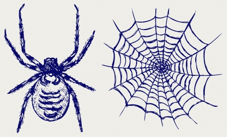 cobwebby: Spider and cobweb