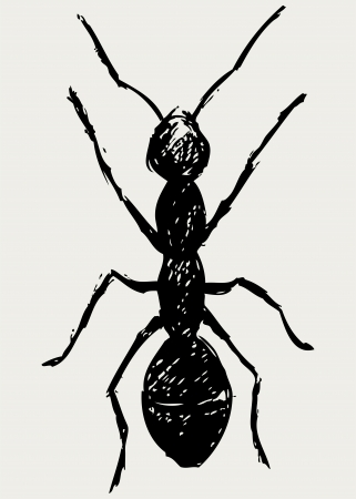 formicidae: Portrait of ant. Sketch